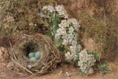 Fine Art Print of May Blossom and a Hedge Sparrow's Nest, 1845 by William Henry Hunt