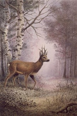 Roe-Deer by Carl Donner - print
