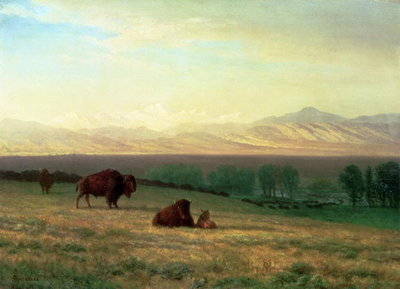 Fine Art Print of Buffalo on the Plains, c.1890 by Albert Bierstadt