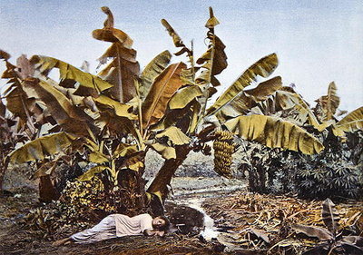 Fine Art Print of A banana and manioc plantation in New Caledonia, late 19th century by French School