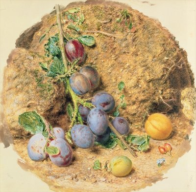 Fine Art Print of Plums by William Henry Hunt