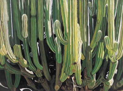 Fine Art Print of Large Candelabro Cactus in Oaxaca, 2003 by Pedro Diego Alvarado