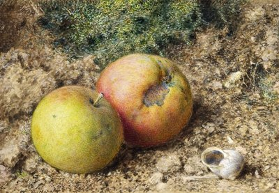 Still life with two apples and a snail shell Poster Art Print by William Henry Hunt
