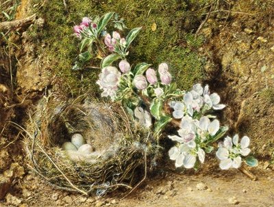 Fine Art Print of Branch of Apple Blossom and Bird's Nest by William Henry Hunt