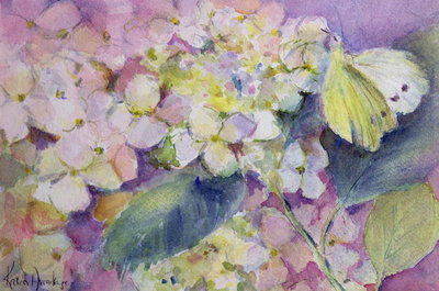 Fine Art Print of Pale Clouded Yellow Butterfly, Colias Hyale on Hydrangea by Karen Armitage