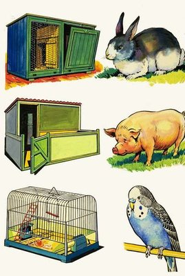 Pets and Their Homes: Rabbit, Pig and Budgerigar Poster Art Print by English School
