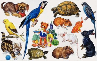 Animal montage Poster Art Print by English School
