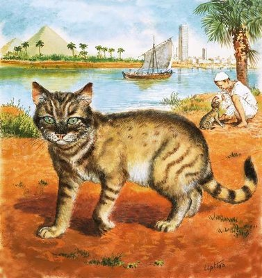 Cat in on the banks of the Nile Poster Art Print by Clive Uptton