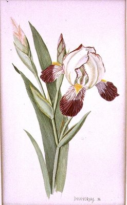 Botanical Iris, 1996 (w/c on paper) by Lillian Delevoryas - print