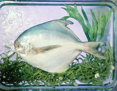 Fine Art Print of Pomfret, tagliatelle, tarragon & spring onion, 1990 by Norman Hollands