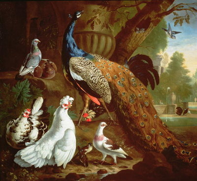 A Peacock in a Classical Landscape, 1719 Poster Art Print by Pieter Casteels