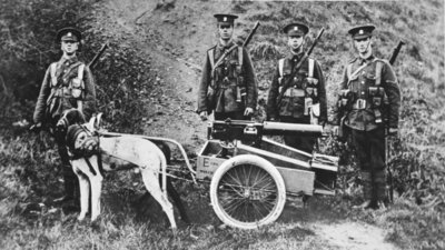 British Dogs of War on the Belgian model: an Officer's experiment in dog-traction for machine-guns, from 'The Illustrated War News' Poster Art Print by English Photographer