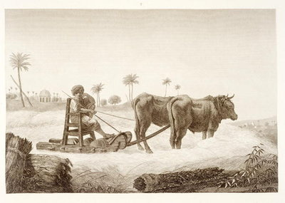 Fine Art Print of Harvesting Corn, from Volume II Arts and Trades of 'Description of Egypt', pub. under the orders of Napoleon, 1822 by Nicolas Jacques Conte