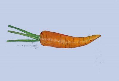 Fine Art Print of Carrot, 2007 by Sarah Thompson-Engels