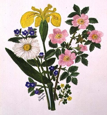 Fine Art Print of Iris, Speedwell, Daisy and Dog rose by Ursula Hodgson