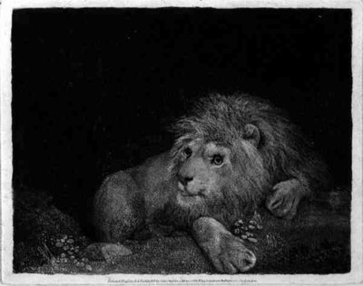 A Lion (A Recumbent Lion) engraved by the artist, pub. 1788 (etching) by George Stubbs - print