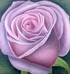 Big Rose, 2003 Poster Art Print by Ruth Addinall