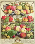 September, from 'Twelve Months of Fruits', by Robert Furber Poster Art Print by Pieter Casteels
