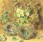 Primroses and Birds' Nests Poster Art Print by William Henry Hunt