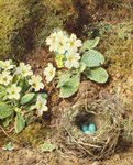 Primroses and Bird's Nest with Three Blue Eggs Poster Art Print by William Henry Hunt