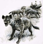 Hyenas feeding on a zebra carcas with vultures looking on Poster Art Print by English School