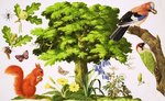 The Wonderful Oak Tree Poster Art Print by English School