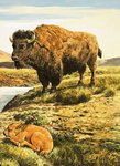 Buffalo Poster Art Print by English School