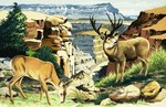 Mule deer at the Grand Canyon National Park Poster Art Print by English School