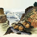 Chipmunks at the Grand Canyon National Park Poster Art Print by English School