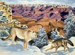 Puma and Coyote meet at the Grand Canyon National Park Poster Art Print by English School