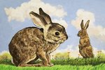 Rabbitis Poster Art Print by English School