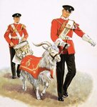 Fine Art Print of An army mascot goat by Clive Uptton