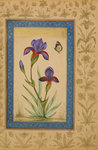 Blue iris with butterfly Poster Art Print by Muhammad Khan