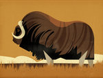 Musk Ox by Dieter Braun - print