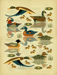 Quack by Dieter Braun - print