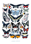 Butterflies by Hanna Melin - print