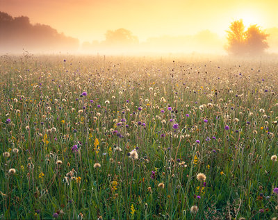 Wiltshire Wildlfower Meadow Poster Art Print by Damian Debski