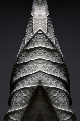 Leaf Sculptures 4 Poster Art Print by Annie Walters
