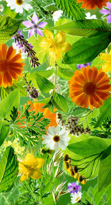 Fine Art Print of Medicinal Plants by Carol Sharp