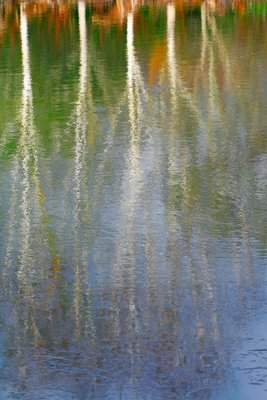 Tree Reflections by Fiona Keene - print