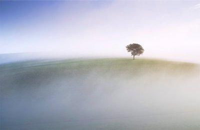 Ash Tree on the Downs by Colin Roberts - print