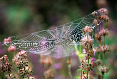 Dewy-covered Spider's Web by Torie Chugg - print