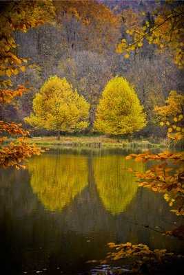 Four Trees In A Frame by Erwin Scheriau - print