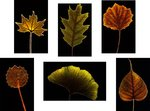 Leaf Portraits botanical print by Henrique Souto