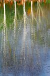 Fine Art Print of Tree Reflections by Fiona Keene