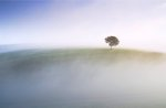 Fine Art Print of Ash Tree on the Downs by Colin Roberts