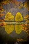 Fine Art Print of Four Trees In A Frame by Erwin Scheriau