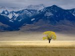 Fine Art Print of Lone Fall Tree by Dennis Frates