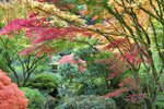 Japanese Gardens in Fall botanical print by Dennis Frates
