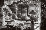 Fine Art Print of In Tresco Abbey Gardens by Johnathon Berman